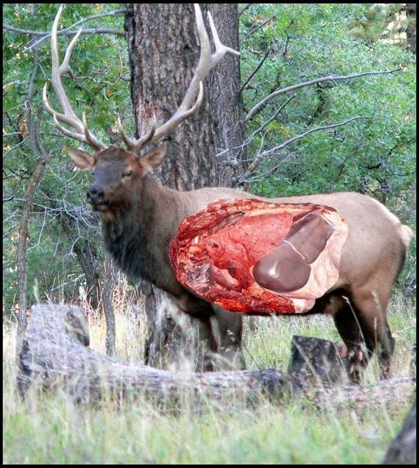 Wapiti Talk Elk Hunting Forum Elk Hunting Tips