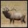 Bow Hunting Elk Forum